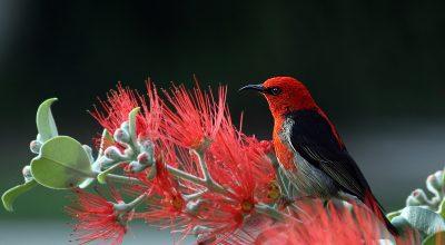 animal-bird-feathers-36762